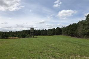 Lake Martin Hunting and Timber Investment - Elmore County AL