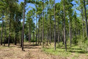 Wilmer Homesite and Recreational Tract - Mobile County AL