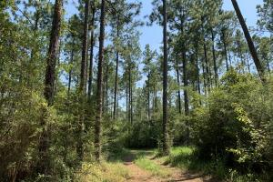 Wilmer Homesite and Recreational Tract in Mobile, AL (8 of 10)