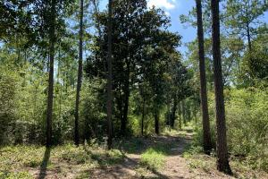 Wilmer Homesite and Recreational Tract in Mobile, AL (5 of 10)
