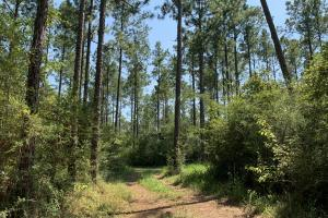 Wilmer Homesite and Recreational Tract in Mobile, AL (6 of 10)