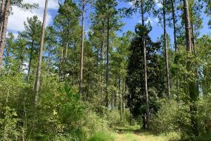 Wilmer Homesite and Recreational Tract in Mobile, AL (7 of 10)