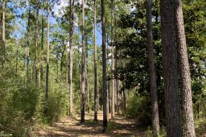 Wilmer Homesite and Recreational Tract in Mobile, AL (10 of 10)
