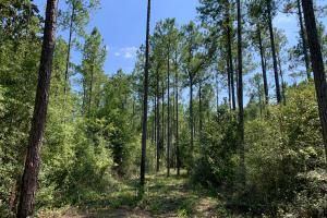 Wilmer Homesite and Recreational Tract in Mobile, AL (3 of 10)
