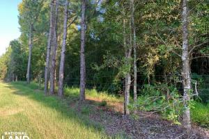 Modelle Bryars Road Homesite B in Baldwin, AL (1 of 4)
