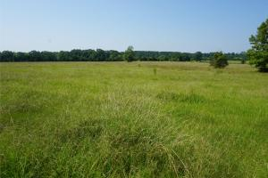 Hunting Tract With Open Land