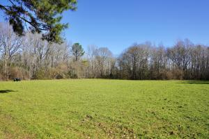 Allenton Timber and Hunting Investment East Tract - Wilcox County AL