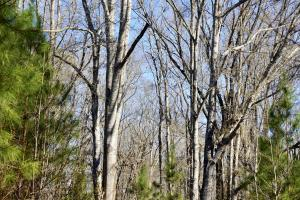 Allenton Timber and Hunting Investment East Tract