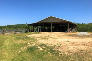 Heffner Cattle Farm in Laurens, SC (64 of 96)