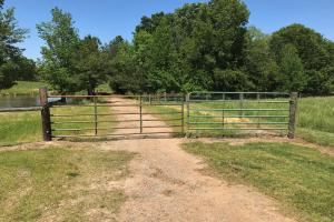 Heffner Cattle Farm in Laurens, SC (71 of 96)