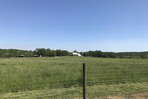 Heffner Cattle Farm in Laurens, SC (82 of 96)