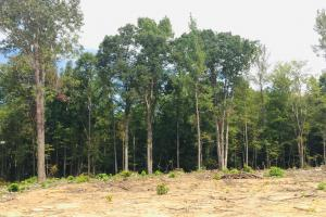 Lancaster Investment Tract with Development Potential in Lancaster, SC (7 of 24)