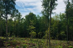 Lancaster Investment Tract with Development Potential in Lancaster, SC (6 of 24)