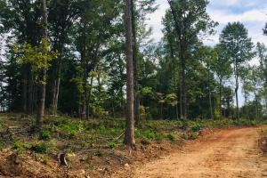Lancaster Investment Tract with Development Potential in Lancaster, SC (5 of 24)