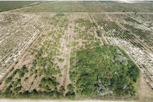 Labelle Rich Farmland Citrus Grove - Hendry County, FL
