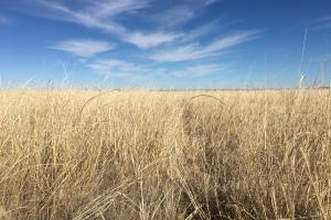 Income Producing - CRP KIowa County, CO - Kiowa County CO