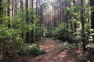 Grenada Hardwood and Wildlife Sanctuary - Grenada County MS