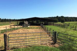 cattle operations area (30 of 38)