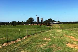 Hickory Grove Cattle Ranch in Pearl River, MS (29 of 38)