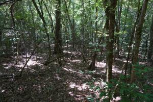 Greensboro Hubbard Road Hunting & Timber Tract in Hale, AL (8 of 13)