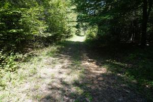 Greensboro Hubbard Road Hunting & Timber Tract in Hale, AL (13 of 13)