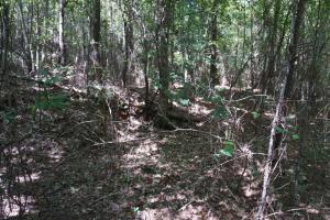 Greensboro Hubbard Road Hunting & Timber Tract in Hale, AL (10 of 13)