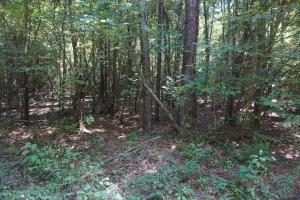 Greensboro Hubbard Road Hunting & Timber Tract in Hale, AL (7 of 13)