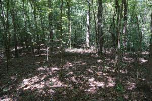 Greensboro Hubbard Road Hunting & Timber Tract in Hale, AL (9 of 13)