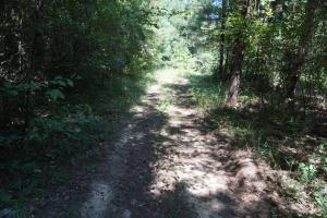 Greensboro Hubbard Road Hunting & Timber Tract in Hale, AL (11 of 13)