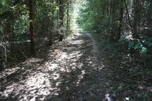 Greensboro Hubbard Road Hunting & Timber Tract in Hale, AL (3 of 13)