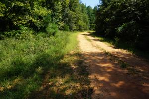 Greensboro Hubbard Road Hunting & Timber Tract in Hale, AL (12 of 13)