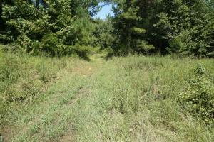 Greensboro Hubbard Road Hunting & Timber Tract in Hale, AL (5 of 13)