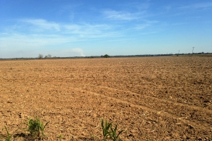 200 Acres Farmland & Hunting Land