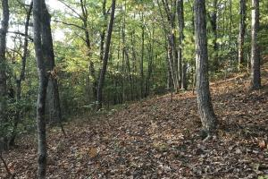 Wooded Homesite & Recreational Property - Roane County TN
