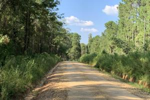 Highway 84 Zacchini Road Timber & Recreational Tract in Covington, AL (8 of 10)