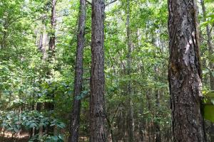 Highway 84 Zacchini Road Timber & Recreational Tract in Covington, AL (7 of 10)