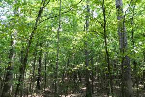 Highway 84 Zacchini Road Timber & Recreational Tract in Covington, AL (9 of 10)