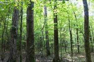 Highway 84 Zacchini Road Timber & Recreational Tract in Covington, AL (1 of 10)