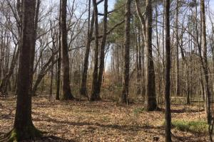 Hamilton Hunting & Timber Tract - Marion County AL