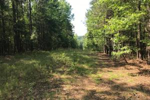 Brown Road Homesite, Hunting-Recreation and Timber Tract in Tuscaloosa, AL (38 of 39)