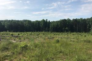 Brown Road Homesite, Hunting-Recreation and Timber Tract in Tuscaloosa, AL (8 of 39)