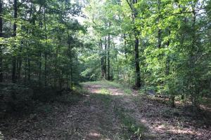 Brown Road Homesite, Hunting-Recreation and Timber Tract in Tuscaloosa, AL (11 of 39)
