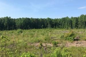Brown Road Homesite, Hunting-Recreation and Timber Tract in Tuscaloosa, AL (31 of 39)