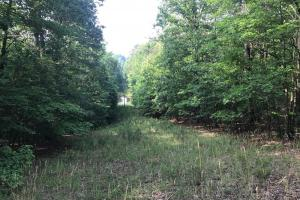 Brown Road Homesite, Hunting-Recreation and Timber Tract in Tuscaloosa, AL (15 of 39)