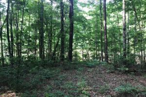 Brown Road Homesite, Hunting-Recreation and Timber Tract in Tuscaloosa, AL (20 of 39)