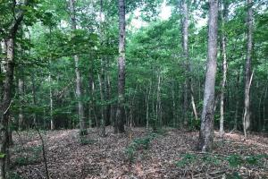 Brown Road Homesite, Hunting-Recreation and Timber Tract in Tuscaloosa, AL (12 of 39)