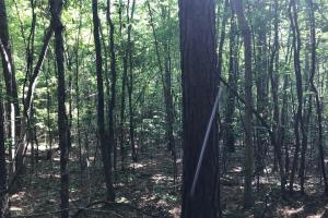 Brown Road Homesite, Hunting-Recreation and Timber Tract in Tuscaloosa, AL (27 of 39)