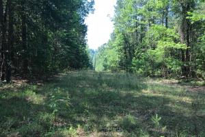 Brown Road Homesite, Hunting-Recreation and Timber Tract in Tuscaloosa, AL (3 of 39)