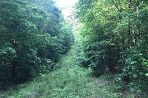 Brown Road Homesite, Hunting-Recreation and Timber Tract in Tuscaloosa, AL (26 of 39)