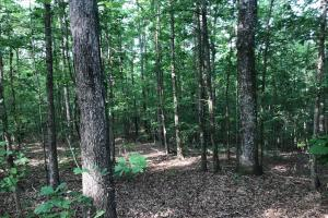 Brown Road Homesite, Hunting-Recreation and Timber Tract - Tuscaloosa County AL